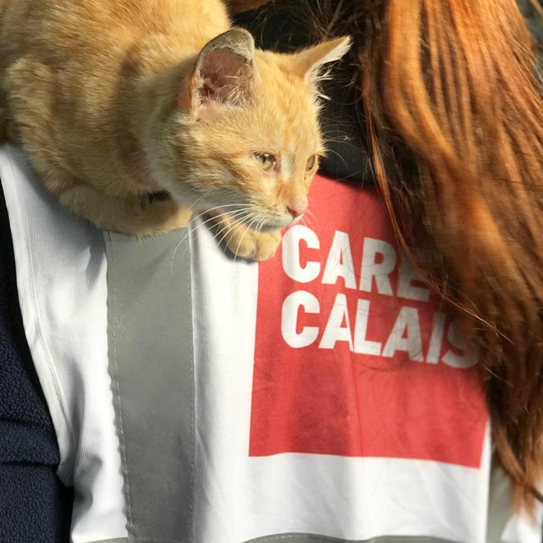 Have you met Marmalade – the Calais Cat?